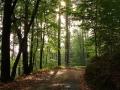 Cesta kolem Vrátenské Hory 06