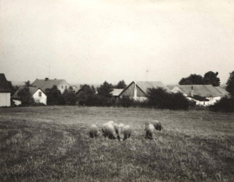 Richtrova zahrada,Velká budova vlevo je Obecní úřad.Na pravé straně zemědělské budovy které ustoupily výstavbě bytovky v první polovině 70 let.